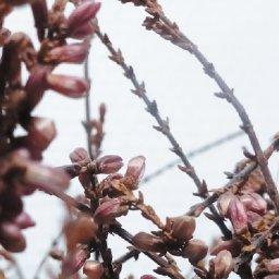 ep-review-baume-lodeur-de-la-lumiere-pest-productions-by-sarah-mckellar
